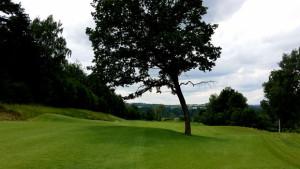 PANORAMA GOLF RESORT - Fairway osmé jamky dělí na dvě poloviny vzrostlý strom.