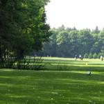 PODĚBRADY: Tradice a lesní novinky nejen na greenech